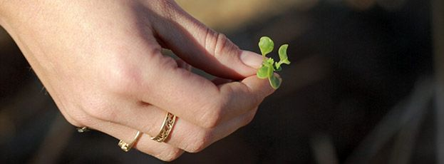 financial-planning-superannuation-growth-seedling-edit